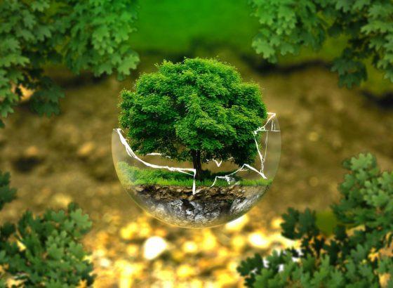 Área Ambiental